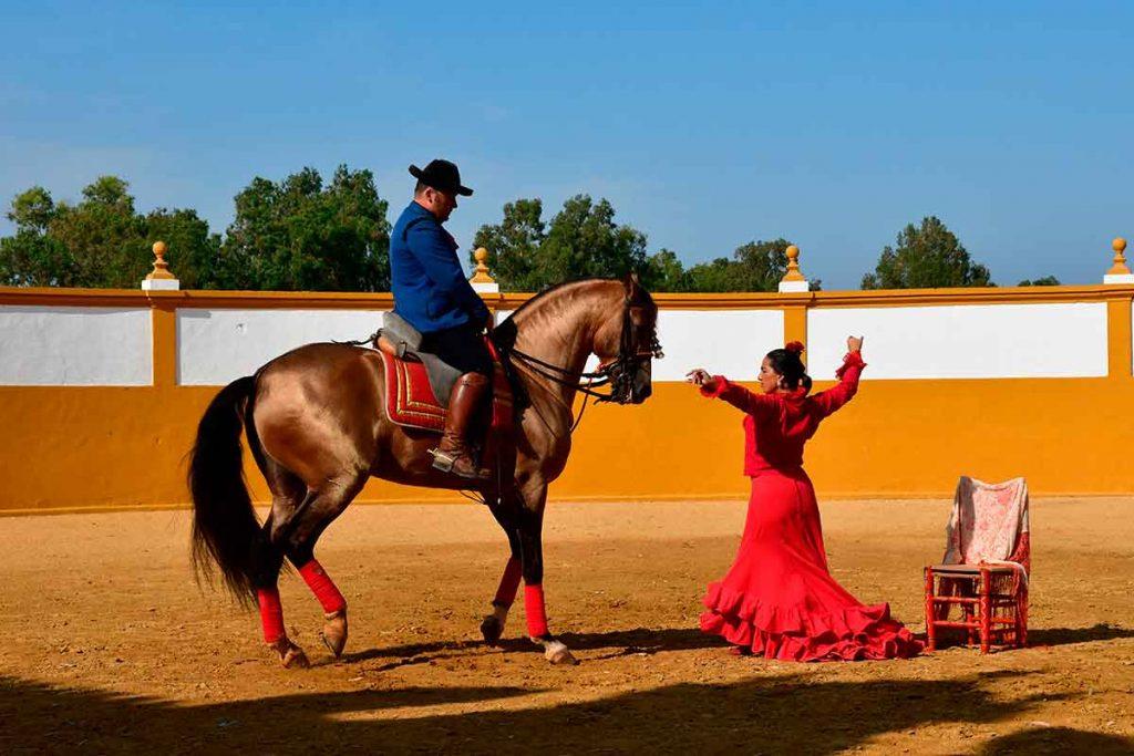 Espectaculo de caballo andaluz y bailaora flamenca