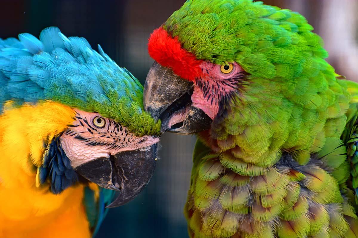 Acuarios y Zoos de Andalucia